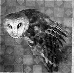 Photo based Mixed Medium image of a Barn Owl with a wicked expression.