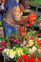 Man choosing from the many colorful anthuriums at the Hilo open market