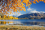 Autumn trees reflected in Lake Wanaka, New Zealand