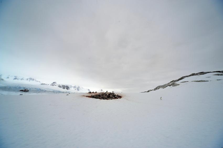Isolated - Petermann Island