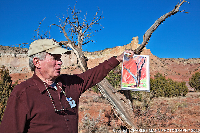 Docent and tour guide Clark De Schweinitz holds a copy of Georgia O'Keefe's painting titled Gerald's Tree near the ancient juniper that is believed to be the subject tree of the painting.