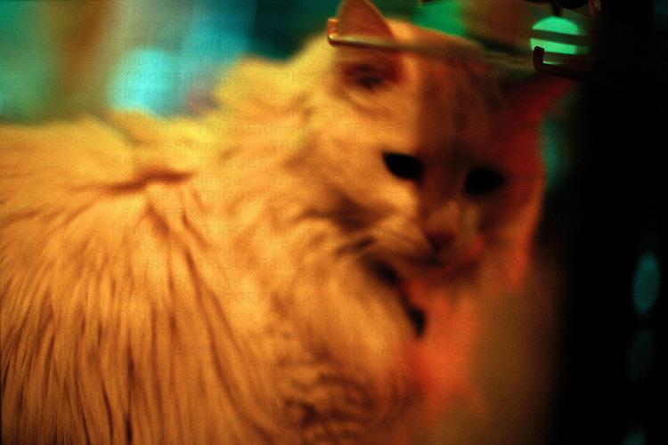 soft focus portrait of a cat in yellow/orange light