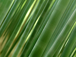 Abstract blurred closeup of green bamboo forest closeup of stems, artistic background
