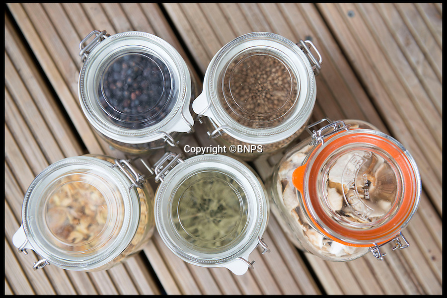 BNPS.co.uk (01202 558833)<br /> Pic: LauraDale/BNPS<br /> <br /> A sample of ingredients used for brewing Batch 38 of Conker Spirit gin.<br /> <br /> A canny entrepreneur has launched Britain's smallest commercial gin distillery - after setting it up in the confines of his own kitchen.<br /> <br /> Rupert Holloway packed in his high-flying job as a chartered surveyor to start producing the trendy spirit one bottle at a time at his home in Christchurch, Dorset.<br /> <br /> His miniature distillery is the first ever to open in the county - and his unique recipe uses botanicals found in the hedgerows, forests and coastline of the county.<br /> <br /> He experimented with 37 recipes before settling on one made with gorse flowers and elderberriers hand-picked from the New Forest, and samphire, a sea vegetable, from the sea shore.<br /> <br /> The gin, called Conker Spirit, will be launched in time for Christmas and it is expected to sell for &pound;30 a bottle.