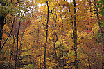 Fall Foliage<br />