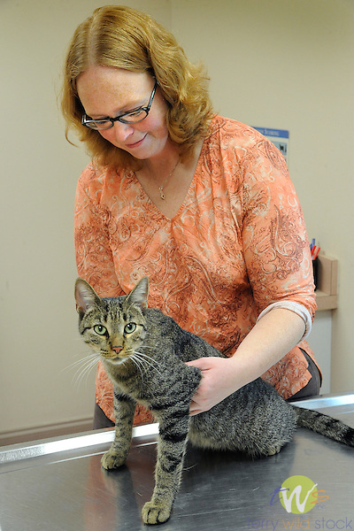 The Animal Hospital, 1828 East 3rd Street, Williamsport, PA . Cat exam. Dr. Amy Howie examining Norman.
