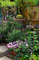 A courtyard of containers planted with mixed summer flowering perennials and bedding plants, succulents and cactii.