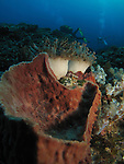 Orchid Island, Taiwan -- Barrel sponge and soft coral with divers in the background.