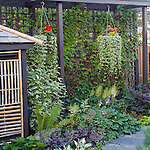 climbing plants perrenials and trellis