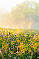 Wildflowers cover a Native American burial grounds in Shakopee, Minnesota. The burial mounds are believed to date back more than 2,000 years from the Mdewakanton Sioux (Dakota) Community.