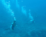 Divers emerge above the reef at the end of our dive.  &quot;The Garden&quot; dive site, Costa Maya, Mexico.