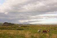 Icelandic Horses<br /> Iceland
