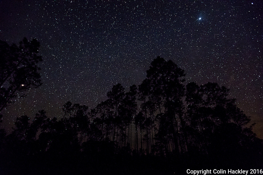 CLIO, FLA. 5/29/16-Stars shine through the pines of the Apalachicola National Forest. Located in the heart of the panhandle the forest has some of the best star-gazing skies in Florida. <br /> <br /> COLIN HACKLEY PHOTO