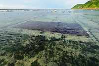 Seaweed farms growing in shallow water, Kutuh, Bali, Indonesia.