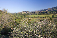View of Chaparral from San Ynez Valley