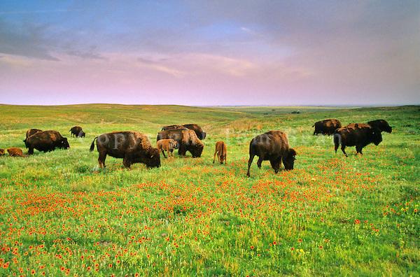 Prairie Preserve Basin Prairie Preserve
