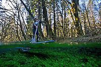 Greg McCormack Explores the Quinault Rainforest via Paddleboard - Olympic National Park - Washington State