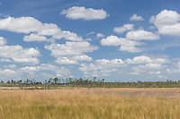 A view of Hopkins Prairie in Ocala National Forest in Florida.