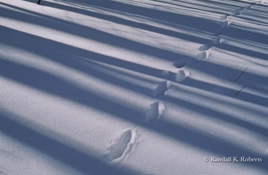 Footprints in a snowy woods.