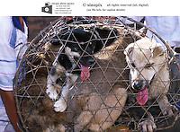 Vietnam Dog Meat