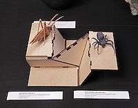 Katydid HP, opus 629, and Brown Widow, opus 586 insect origami designed and folded by Robert Lang, California.