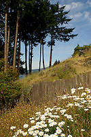Wildflowers and wooden fence on Bowen Island, British Columbia, Canada