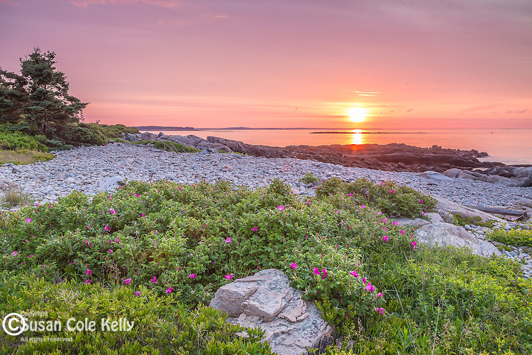 Sunrise at Blueberry Hill in Acadia National Park, Maine, USA