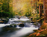 Ortonized image of Autumn color along a stream in the Great Smoky Mountains National Park. Smoky Mountain photos by Gordon and Jan Brugman.