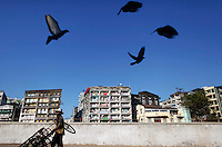 Birds fly as a porter pushes his cart at Yangon's river port November 29, 2011. U.S. Secretary of State Hillary Clinton will test Myanmar's tentative democratic reforms this week in a high-stakes visit that could mark the resource-rich Asian nation's return to the world stage after more than 50 years of political isolation.   REUTERS/Damir Sagolj (MYANMAR)