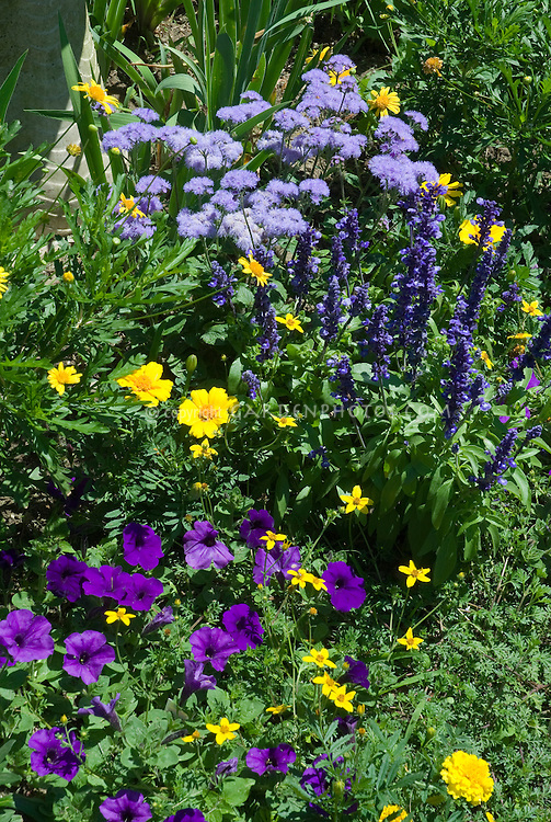 Color themed garden of blue and yellow and purple with