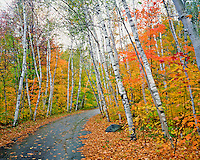 Road in White Mountains New Hampshire