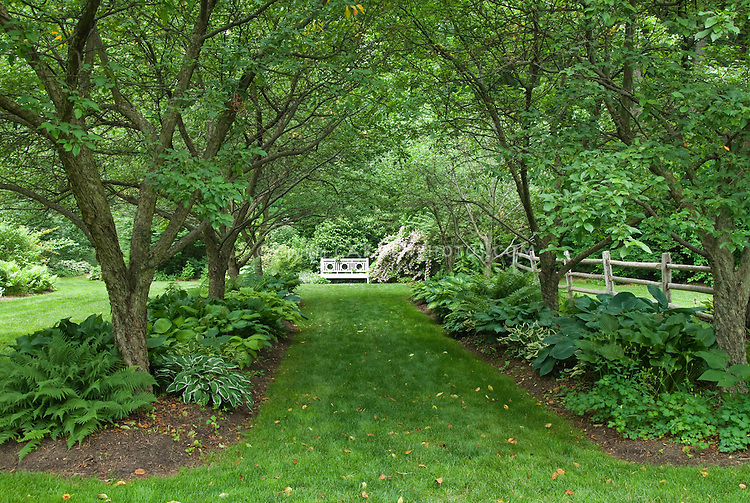 garden design with hostas under trees in shade garden plant uamp flower stock with front yard
