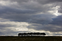 Group of trees below stormy sky, Cotswolds, Oxfordshire, United Kingdom