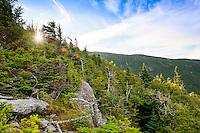 20130806 Hiking Mt. Mansfield's Sunset Ridge Trail.