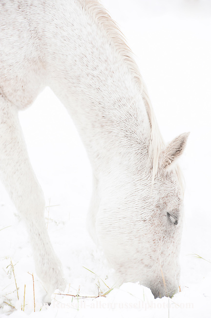 Horses-nobody