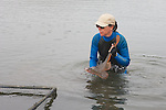 Kitty Barnett With Thornback Ray
