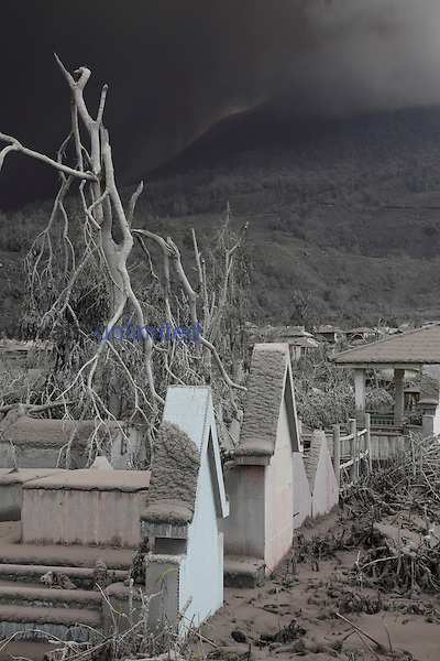 Snapped trees and ash-covered graves near Sinabung Volcano, Indonesia