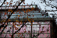 New Caledonia Glasshouse (formerly The Mexican Hothouse), 1830s, Charles Rohault de Fleury, Jardin des Plantes, Museum National d'Histoire Naturelle, Paris, France. View from the side, through autumn leaves in the winter early morning light, showing the glass and metal structures. The New Caledonia Glasshouse, or Hothouse, was the first French glass and iron building.