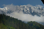 Mist between snow capped mountains and evergreen forest. Imst district,Tyrol/Tirol. Austria.