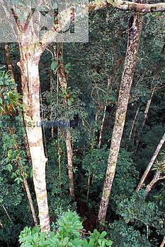 Rain forest, looking down through canopy, Amazon River Basin, Peru
