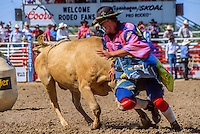 Rodeo event; Safety clown working the Bull riding