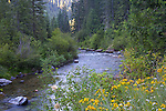 Idaho, North, Avery. Morning on the North Fork of the St. Joe River in summer.