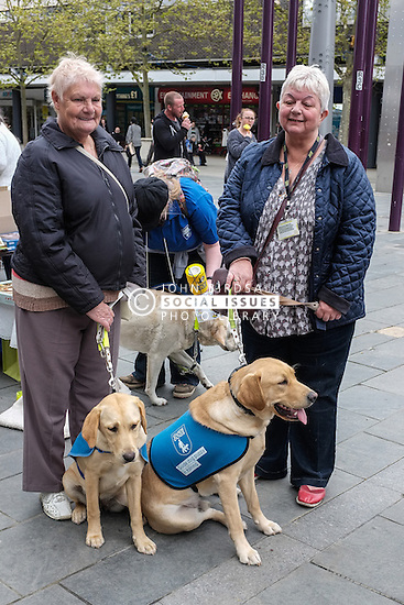 Guide Dogs in training.