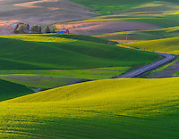 The Palouse, Whitman County, WA: Elevated view of isolated farm among the abstract patterns of rolling wheat fields