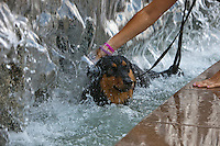 Moscow, Russia, 16/07/2010..A dog cools off  in fountains next to the Kremlin and Red Square during a prolonged heatwave that has seen temperatures of over 37C, a record for the city.