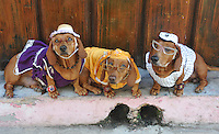 CUBAN DOGS