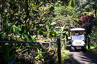 A tourist gets a ride via golf cart at the Hawai'i Tropical Botanical Garden in Onomea, just north of Hilo, Big Island of Hawai'i.