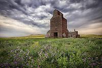 Alfalfa Beauty - Montana (horizontal)