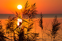 Grass and reeds silhouetted against a Currituck sound sunset.