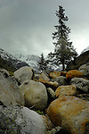 Trees and boulders. Imst district, Tyrol, Austria.